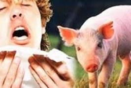 إنفلونزا الخنازير (إنفلونزا H1N1) الاعراض والوقايه منه